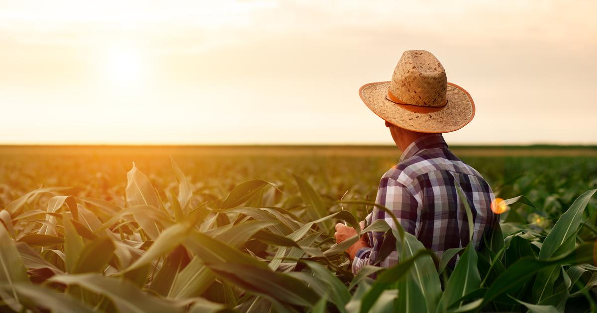 Top DeFi 'yield farmers' share their secrets to a profitable harvest -Decrypt
